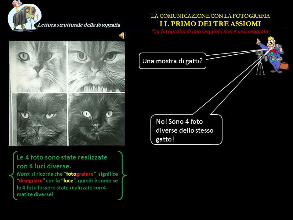 Lettura strutturale della fotografia Una mostra di gatti.