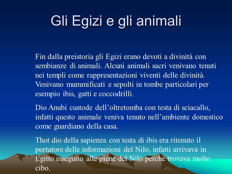 Gli Egizi e gli animali Fin dalla preistoria gli Egizi erano devoti a divinità con sembianze di animali.