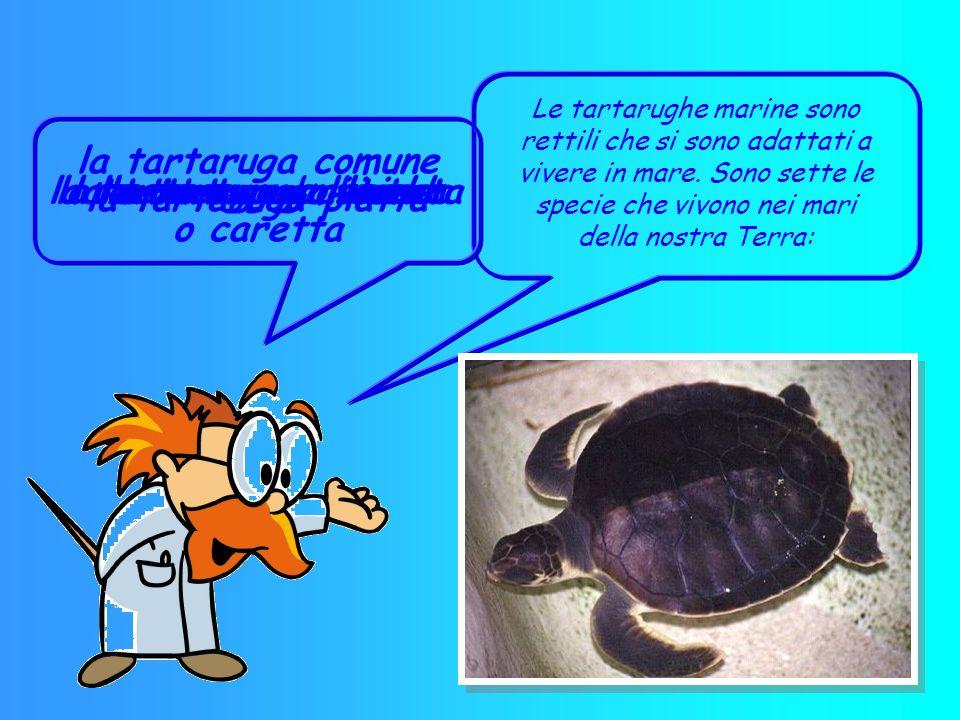 NOME: tartaruga marina CLASSE: rettili SEGNI PARTICOLARI: corazza rigida che racchiude le parti molli del corpo, proteggendole dalle intemperie e dai
