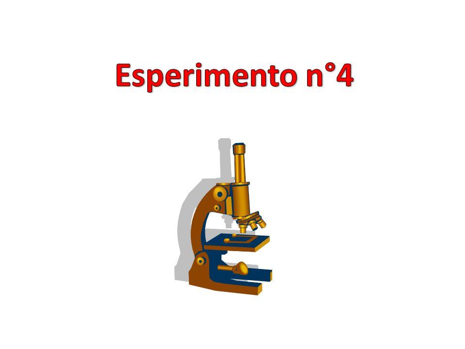 13% Grassi 1% Carboidrati 16% Proteine 5% Sali minerali e vitamine Pagina esperimenti 65% Acqua