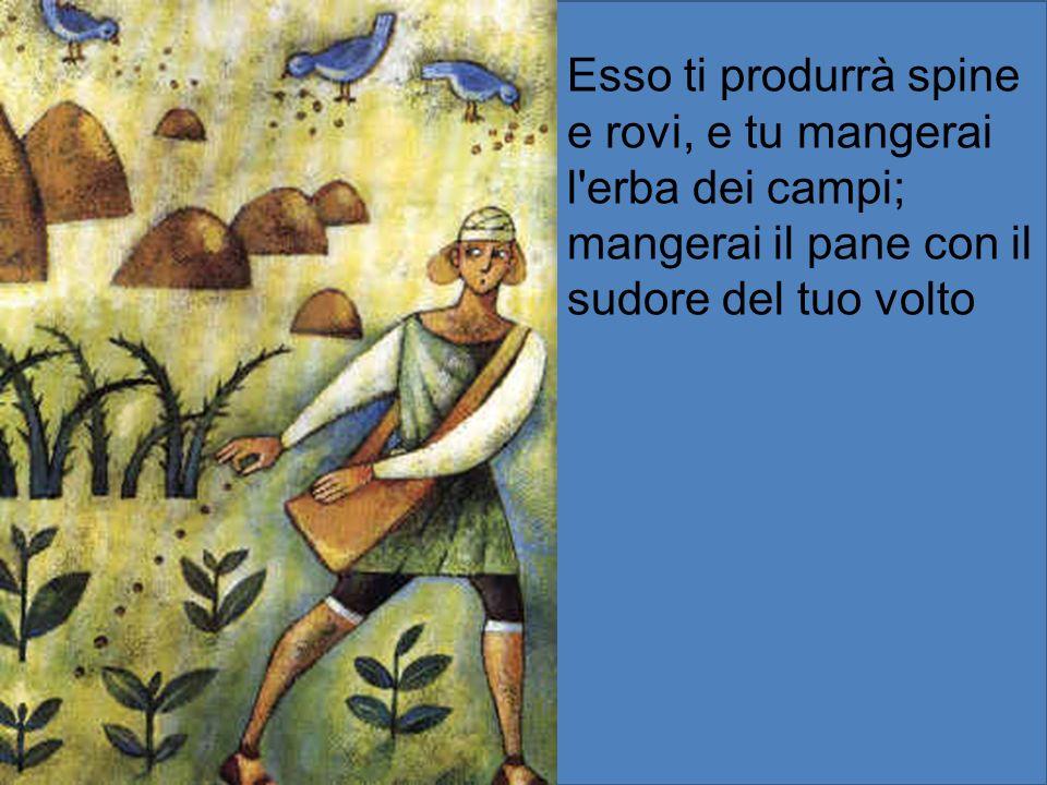 Esso ti produrrà spine e rovi, e tu mangerai l'erba dei campi; mangerai il pane con il sudore del tuo volto