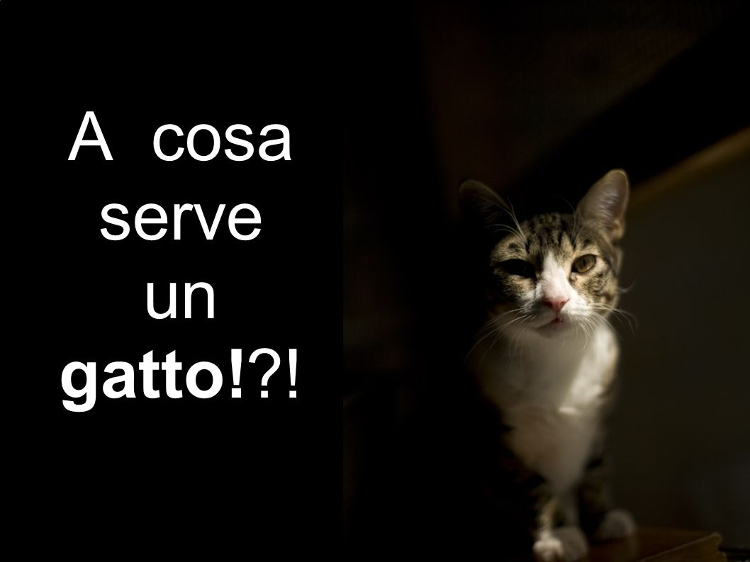 A cosa serve un gatto!?!