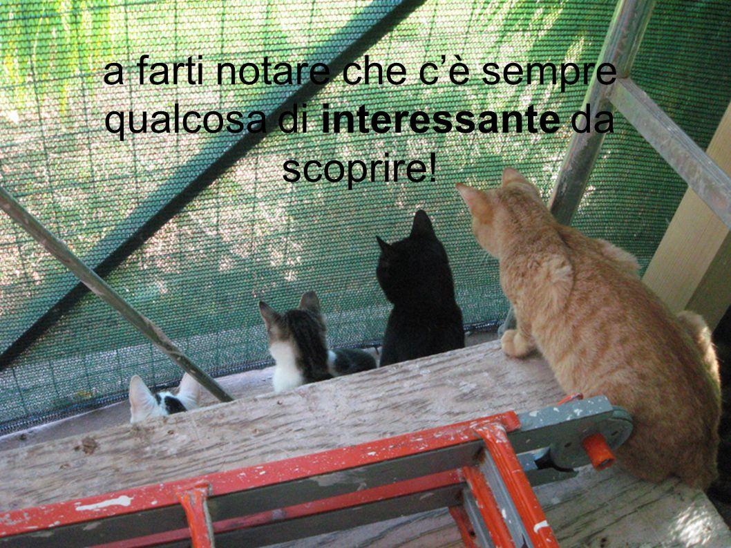 i gatti della Casetta ti aspettano!
