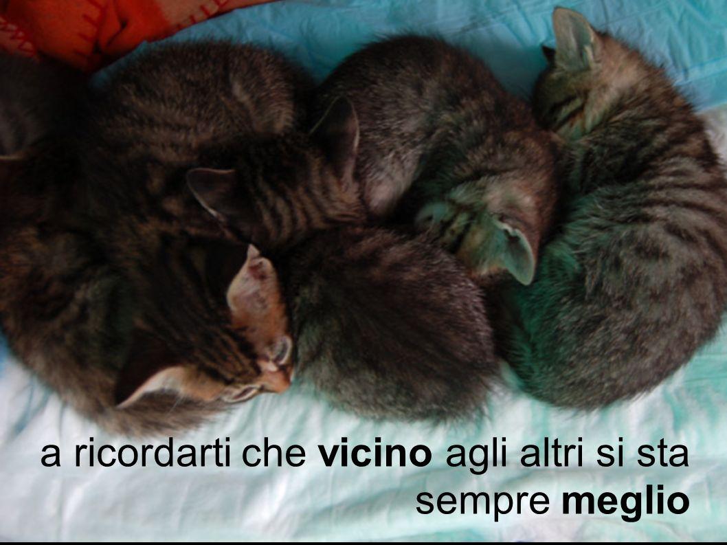 www.lacasettadeigatti.com