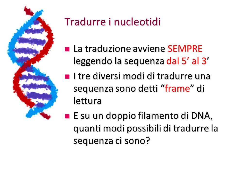 Tradurre i nucleotidi La traduzione avviene SEMPRE leggendo la sequenza dal 5 al 3 La traduzione avviene SEMPRE leggendo la sequenza dal 5 al 3 I tre