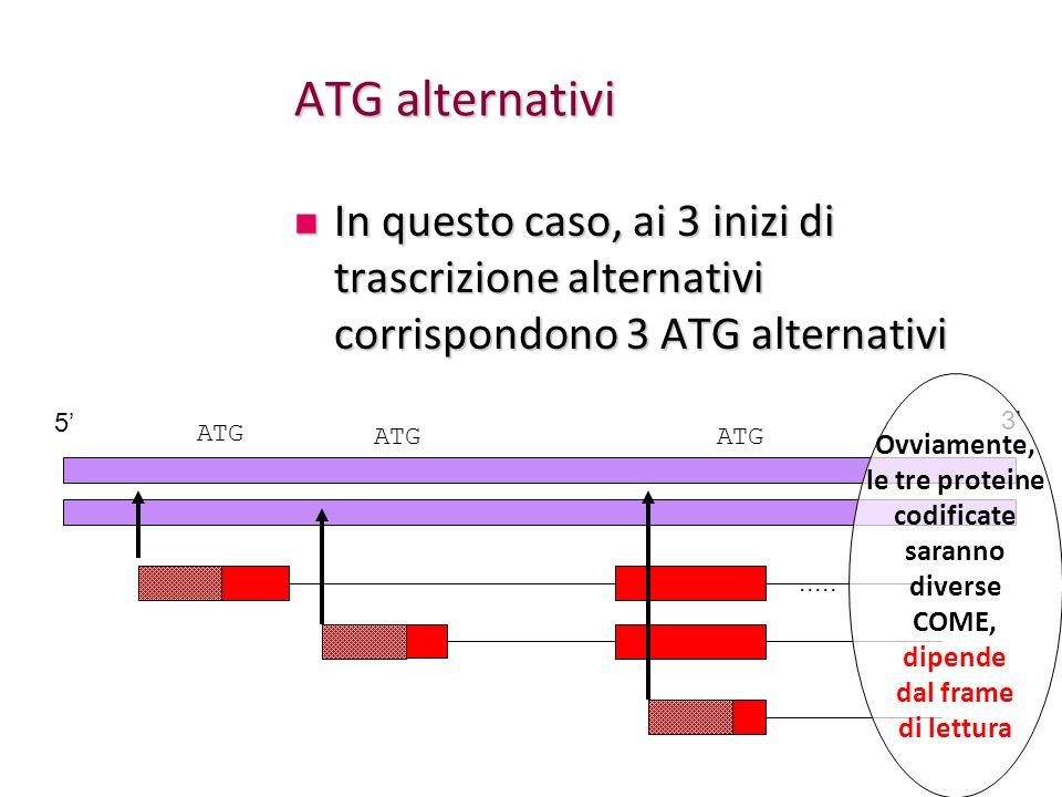 ATG alternativi In questo caso, ai 3 inizi di trascrizione alternativi corrispondono 3 ATG alternativi In questo caso, ai 3 inizi di trascrizione alte