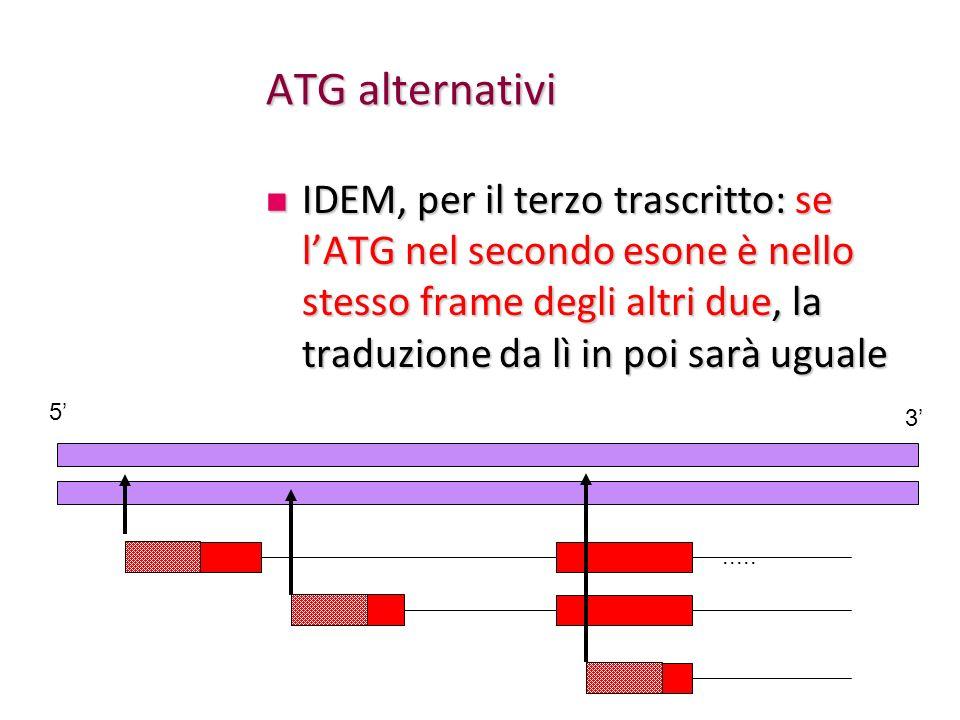 ATG alternativi IDEM, per il terzo trascritto: se lATG nel secondo esone è nello stesso frame degli altri due, la traduzione da lì in poi sarà uguale