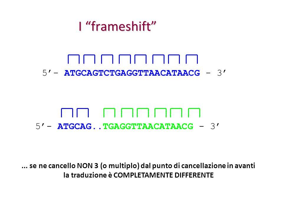 I frameshift 5- ATGCAGTCTGAGGTTAACATAACG - 3 5- ATGCAG..TGAGGTTAACATAACG - 3... se ne cancello NON 3 (o multiplo) dal punto di cancellazione in avanti