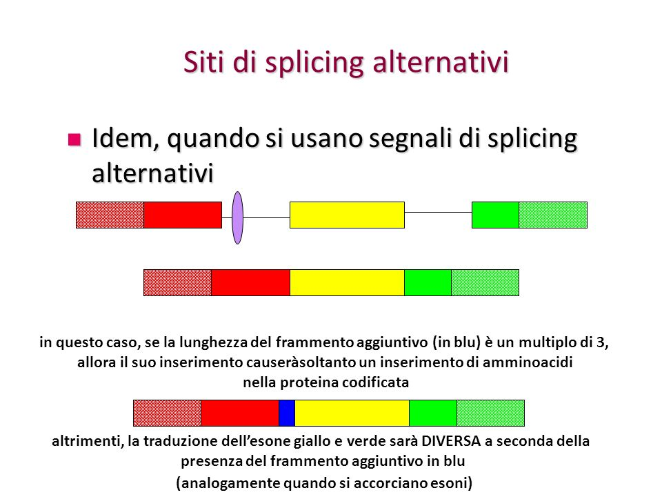 Siti di splicing alternativi Idem, quando si usano segnali di splicing alternativi Idem, quando si usano segnali di splicing alternativi in questo cas