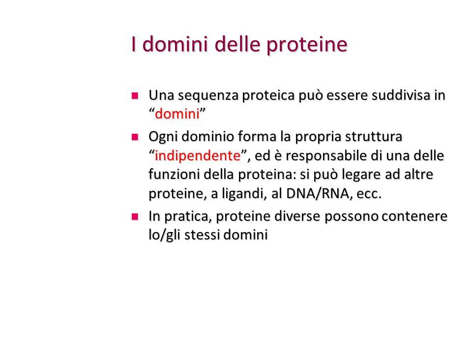 I domini delle proteine Una sequenza proteica può essere suddivisa indomini Una sequenza proteica può essere suddivisa indomini Ogni dominio forma la