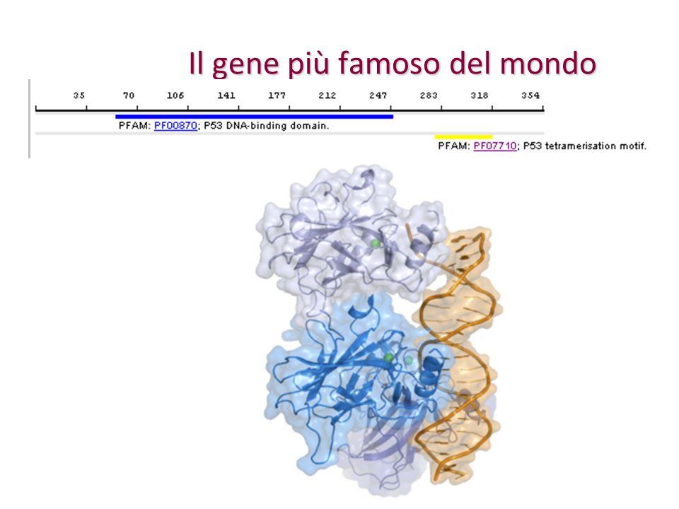 Il gene più famoso del mondo