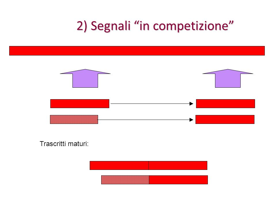 Gli esoni alternativi Generalmente (ma con moltissime eccezioni) gli esoni altertativi (cassetta et similia) hanno proprio lunghezza multipla di tre e frame +1, quindi aggiungono/tolgono pezzi alla proteina codificata Generalmente (ma con moltissime eccezioni) gli esoni altertativi (cassetta et similia) hanno proprio lunghezza multipla di tre e frame +1, quindi aggiungono/tolgono pezzi alla proteina codificata La modularità nella costruzione della regione codificante, daltra parte, si sposa bene con la modularità che si osserva nella proteine La modularità nella costruzione della regione codificante, daltra parte, si sposa bene con la modularità che si osserva nella proteine