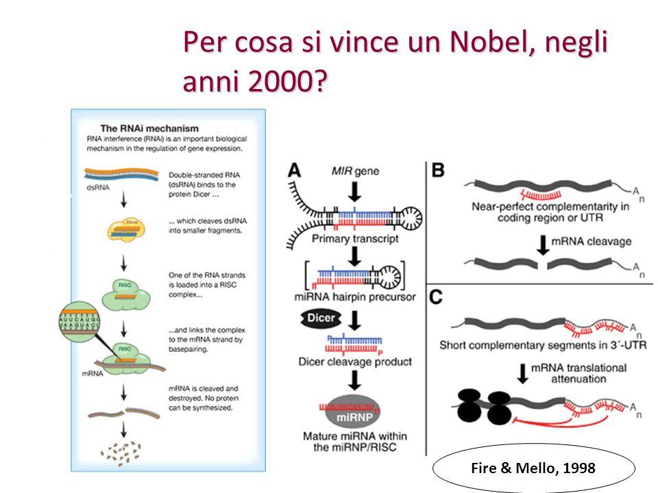 Per cosa si vince un Nobel, negli anni 2000? Fire & Mello, 1998