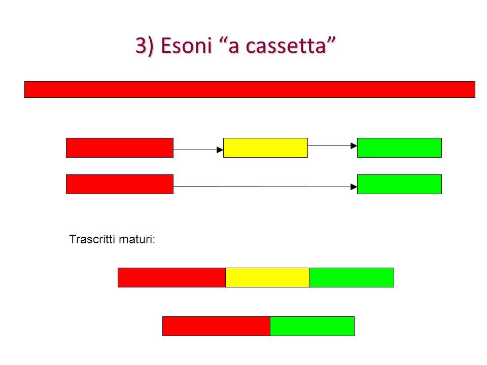 3) Esoni a cassetta Trascritti maturi: