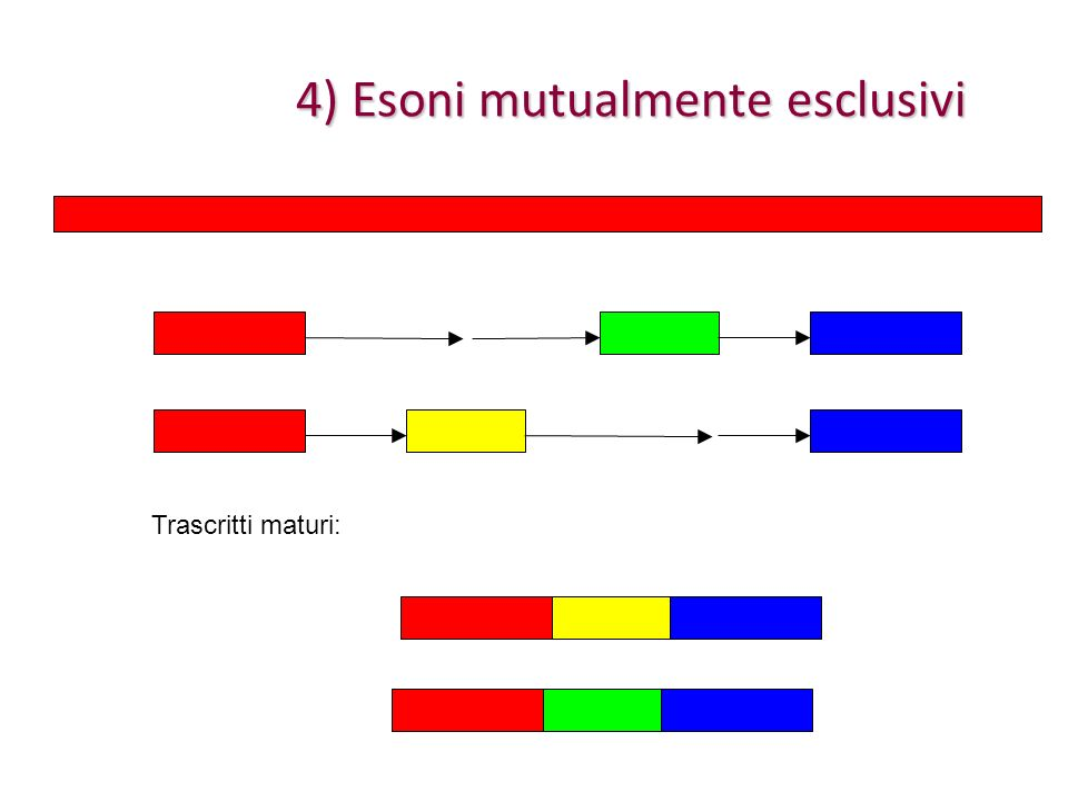 4) Esoni mutualmente esclusivi Trascritti maturi: