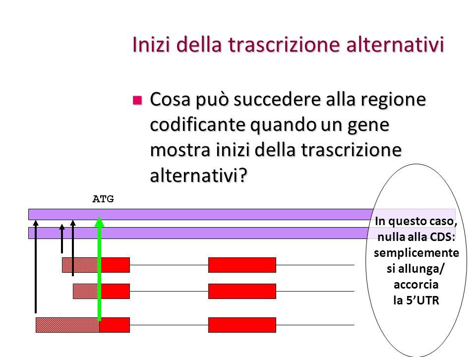 Inizi della trascrizione alternativi Cosa può succedere alla regione codificante quando un gene mostra inizi della trascrizione alternativi? Cosa può