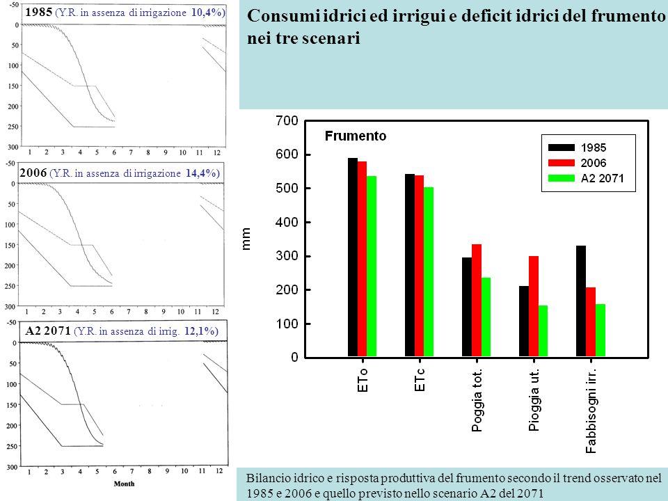 Consumi idrici ed irrigui e deficit idrici del frumento nei tre scenari 1985 (Y.R. in assenza di irrigazione 10,4%) 2006 (Y.R. in assenza di irrigazio