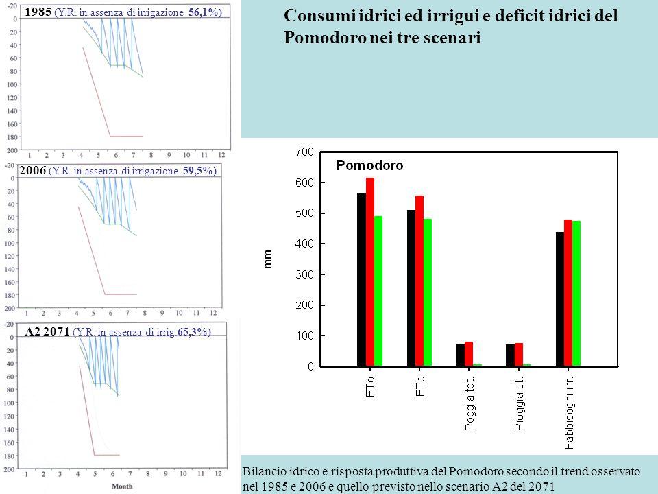 Consumi idrici ed irrigui e deficit idrici del Pomodoro nei tre scenari 1985 (Y.R. in assenza di irrigazione 56,1%) 2006 (Y.R. in assenza di irrigazio
