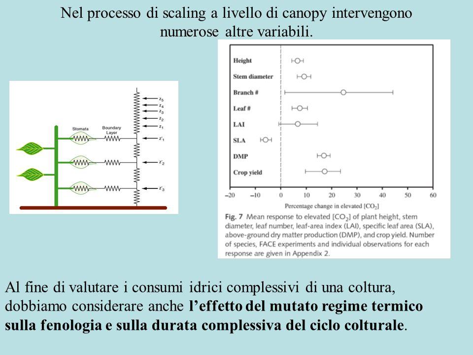 ET = Dati colturali: Resistenza del manto vegetale (s m -1 ) Resistenza aerodinamica (s m -1 ) Leffetto dei cambiamenti climatici sui consumi idrici delle colture vengono complessivamente considerati dalla equazione di Penman-Monteith Dati climatici: Umidità dellaria (KPa) Radiazione (MJ m -2 d -1 ) Temperatura dellaria (°C) Velocità del vento (m s -1 )