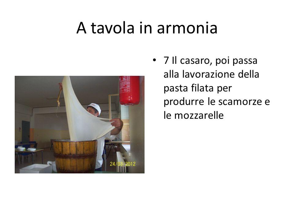 A tavola in armonia 7 Il casaro, poi passa alla lavorazione della pasta filata per produrre le scamorze e le mozzarelle