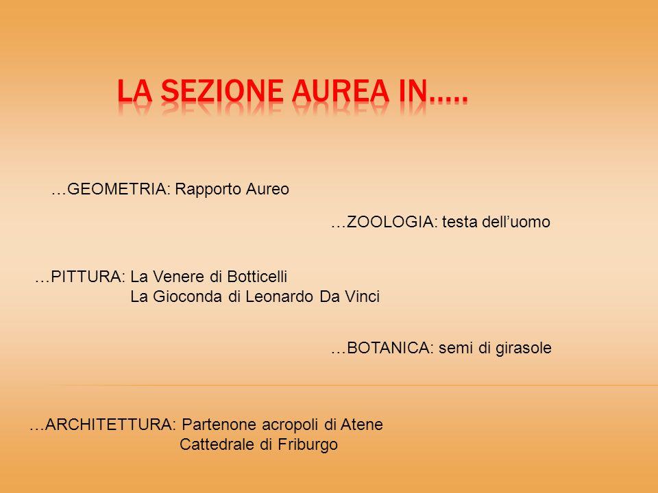 …GEOMETRIA: Rapporto Aureo …BOTANICA: semi di girasole …ZOOLOGIA: testa delluomo …ARCHITETTURA: Partenone acropoli di Atene Cattedrale di Friburgo …PITTURA: La Venere di Botticelli La Gioconda di Leonardo Da Vinci