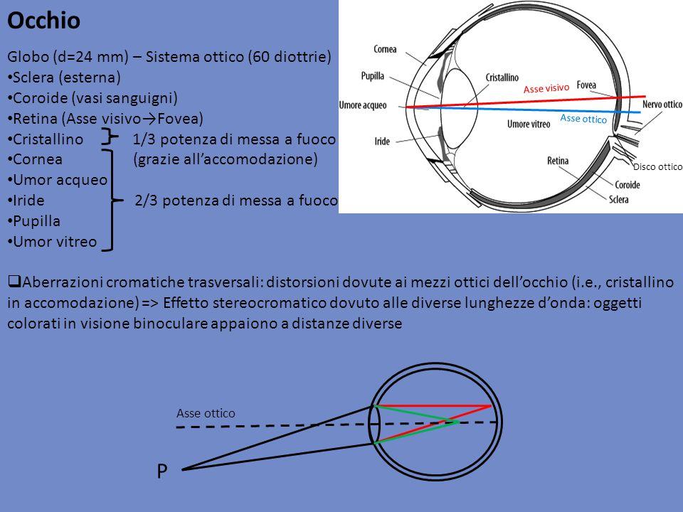 Occhio Globo (d=24 mm) – Sistema ottico (60 diottrie) Sclera (esterna) Coroide (vasi sanguigni) Retina (Asse visivoFovea) Cristallino 1/3 potenza di m