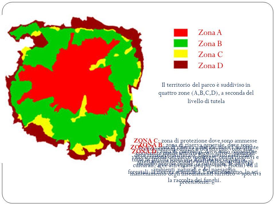 Zona A Zona B Zona C Zona D Il territorio del parco è suddiviso in quattro zone (A,B,C,D), a seconda del livello di tutela ZONA A: zona di riserva nat