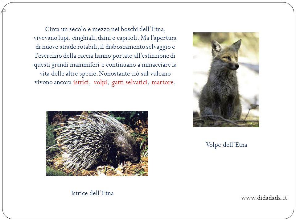 Circa un secolo e mezzo nei boschi dellEtna, vivevano lupi, cinghiali, daini e caprioli. Ma l'apertura di nuove strade rotabili, il disboscamento selv