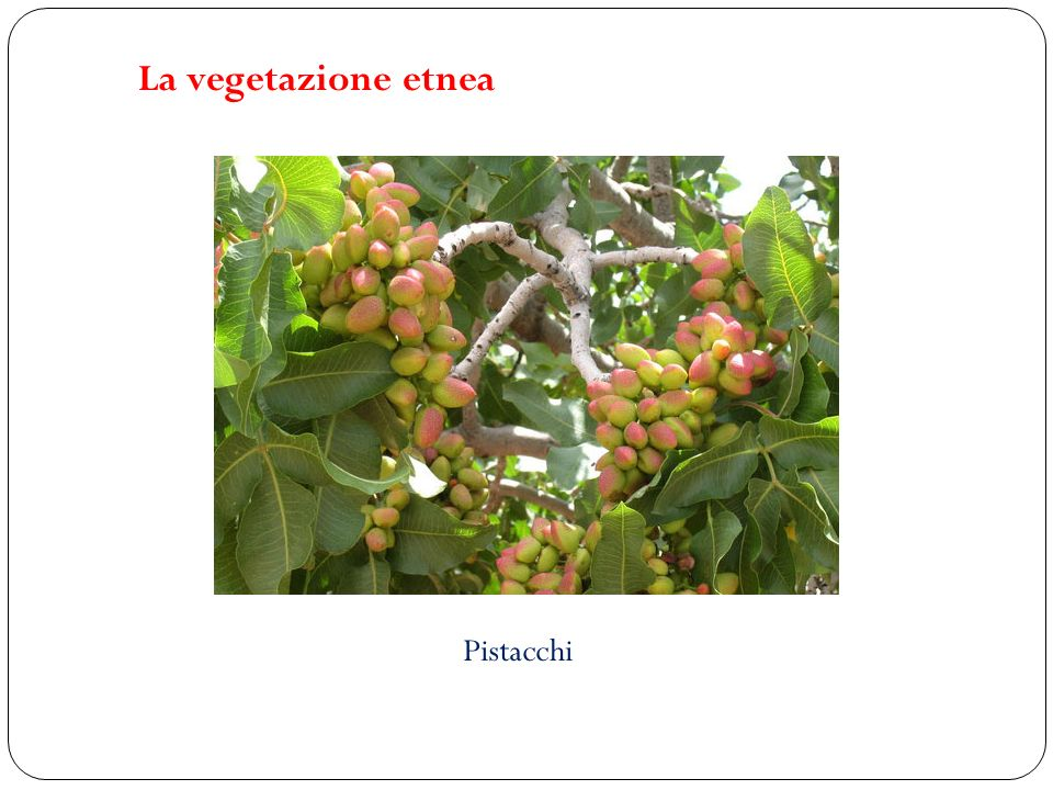 Pistacchi La vegetazione etnea