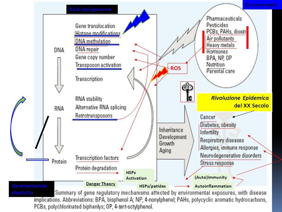 HSPs Activation HSPs/petides Danger Theory (Auto)Immunity Autoinflammation ROS Rivoluzione Epidemica del XX Secolo Environment mRNAs fluid (epi)genome
