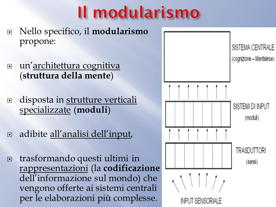 Lapporto maggiore di Gall alla teoria di Fodor sono le quattro caratteristiche delle facoltà verticali che sono: 1) specifiche per dominio, 2) geneticamente determinate (determinate per via innata), 3) associate a strutture neurali distinte (hardwired) 4) computazionalmente autonome.