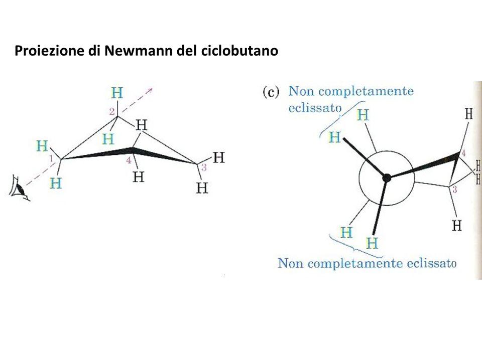 Proiezione di Newmann del ciclobutano