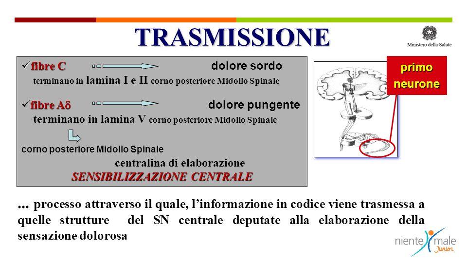 ... processo attraverso il quale, linformazione in codice viene trasmessa a quelle strutture del SN centrale deputate alla elaborazione della sensazio