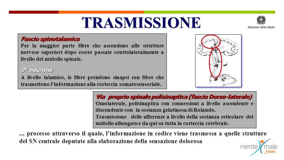 Fascio spinotalamico Per la maggior parte fibre che ascendono alle strutture nervose superiori dopo essere passate controlateralmente a livello del midollo spinale.