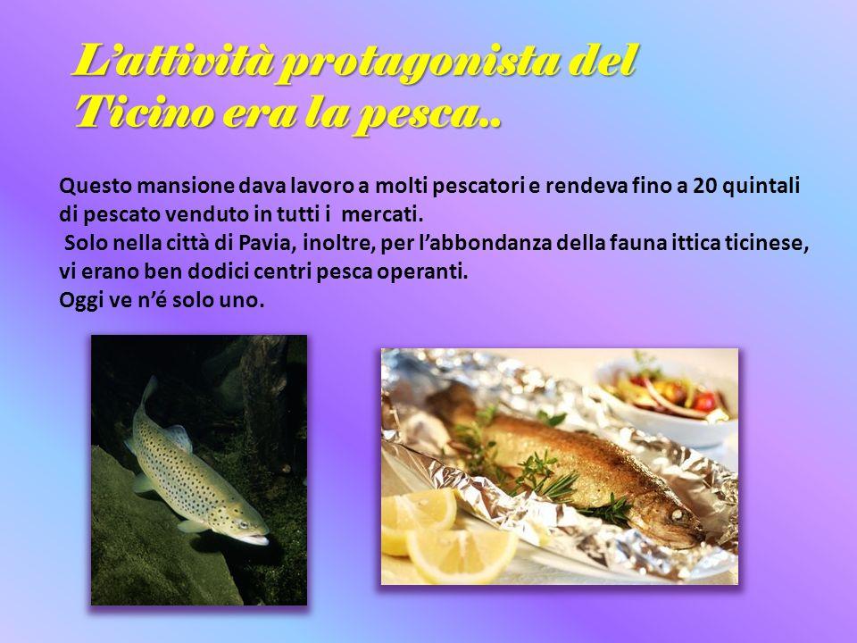 Lattività protagonista del Ticino era la pesca.. Questo mansione dava lavoro a molti pescatori e rendeva fino a 20 quintali di pescato venduto in tutt