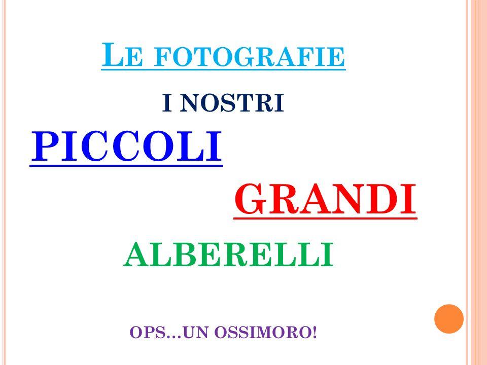 L E FOTOGRAFIE I NOSTRI PICCOLI GRANDI ALBERELLI OPS…UN OSSIMORO!