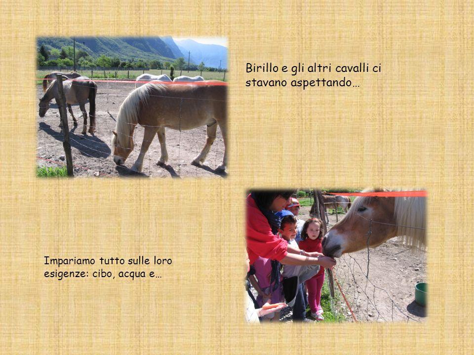Birillo e gli altri cavalli ci stavano aspettando… Impariamo tutto sulle loro esigenze: cibo, acqua e…
