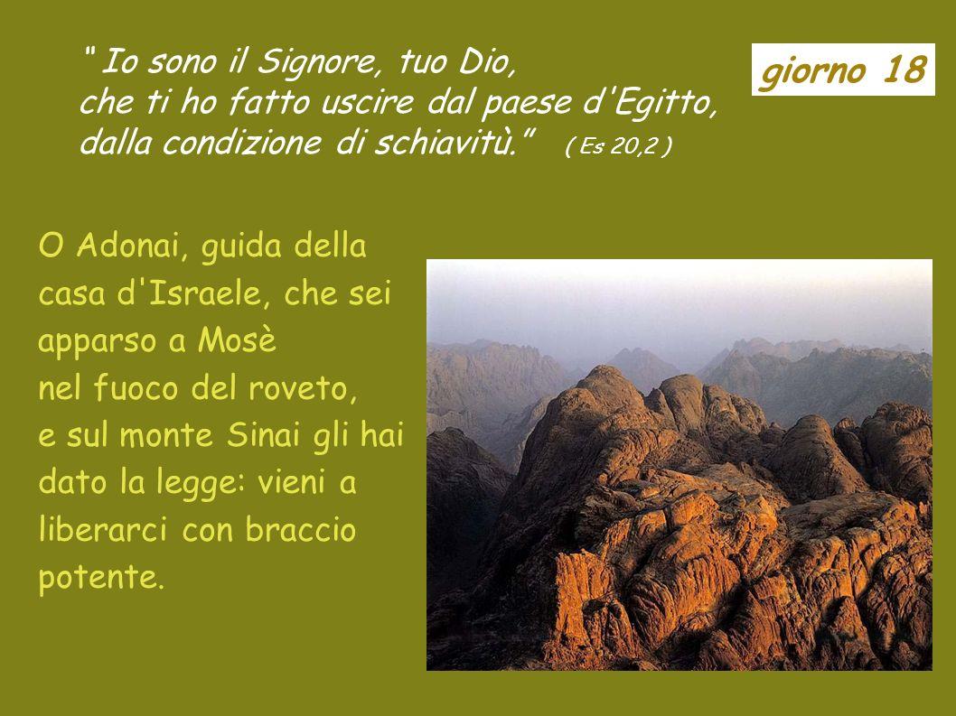 giorno 17 La Sapienza facilmente è contemplata da chi lama e trovata da chiunque la ricerca. ( Sa 6,12 ) O Sapienza, che esci dalla bocca dellAltissim