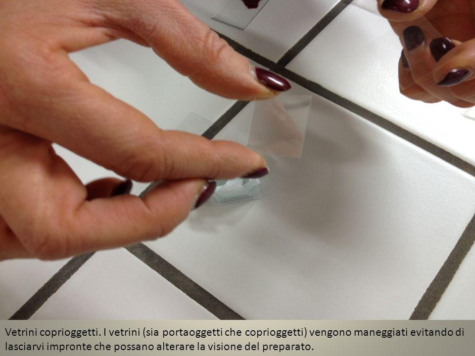 Vetrini coprioggetti. I vetrini (sia portaoggetti che coprioggetti) vengono maneggiati evitando di lasciarvi impronte che possano alterare la visione