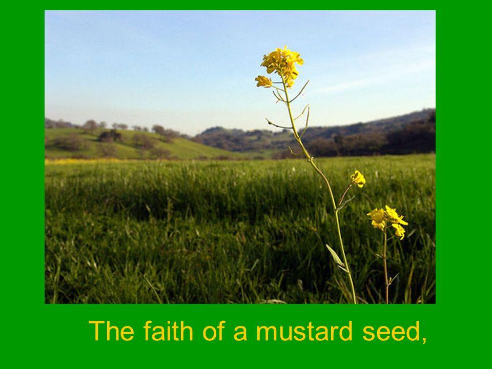 The faith of a mustard seed,