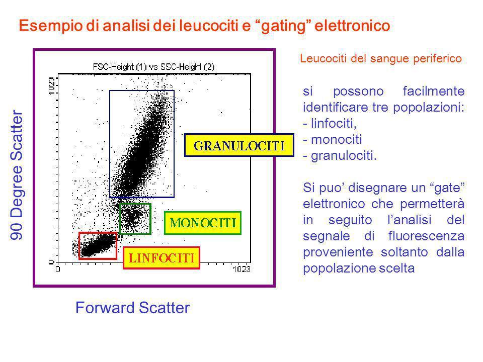 Esempio di analisi dei leucociti e gating elettronico Forward Scatter 90 Degree Scatter si possono facilmente identificare tre popolazioni: - linfocit