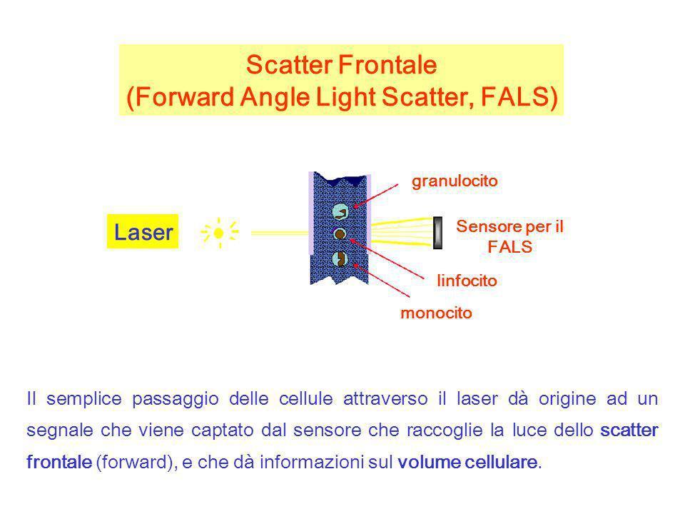 Quando viene utilizzata una sorgente laser, la quantita di luce scatterata nella direzione frontale (lungo lo stesso asse attraverso cui viaggia la luce laser) viene raccolta nel canale del Forward Scatter Lintensita del Forward Scatter e proporzionale alla dimensione, forma, ed omogeneita ottica delle cellule (o delle altre particelle analizzate)