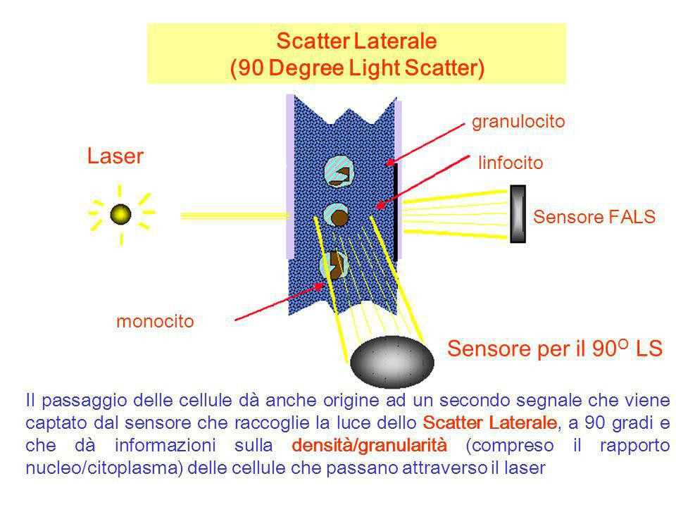 Scatter Laterale (90 Degree Light Scatter) Il passaggio delle cellule dà anche origine ad un secondo segnale che viene captato dal sensore che raccogl