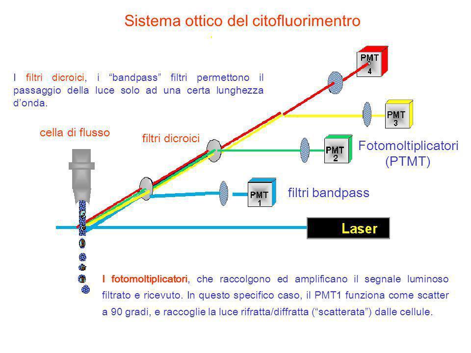 Sistema ottico del citofluorimentro cella di flusso filtri dicroici filtri bandpass Fotomoltiplicatori (PTMT) I fotomoltiplicatori, che raccolgono ed