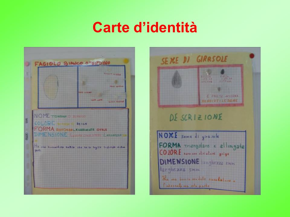Carte didentità