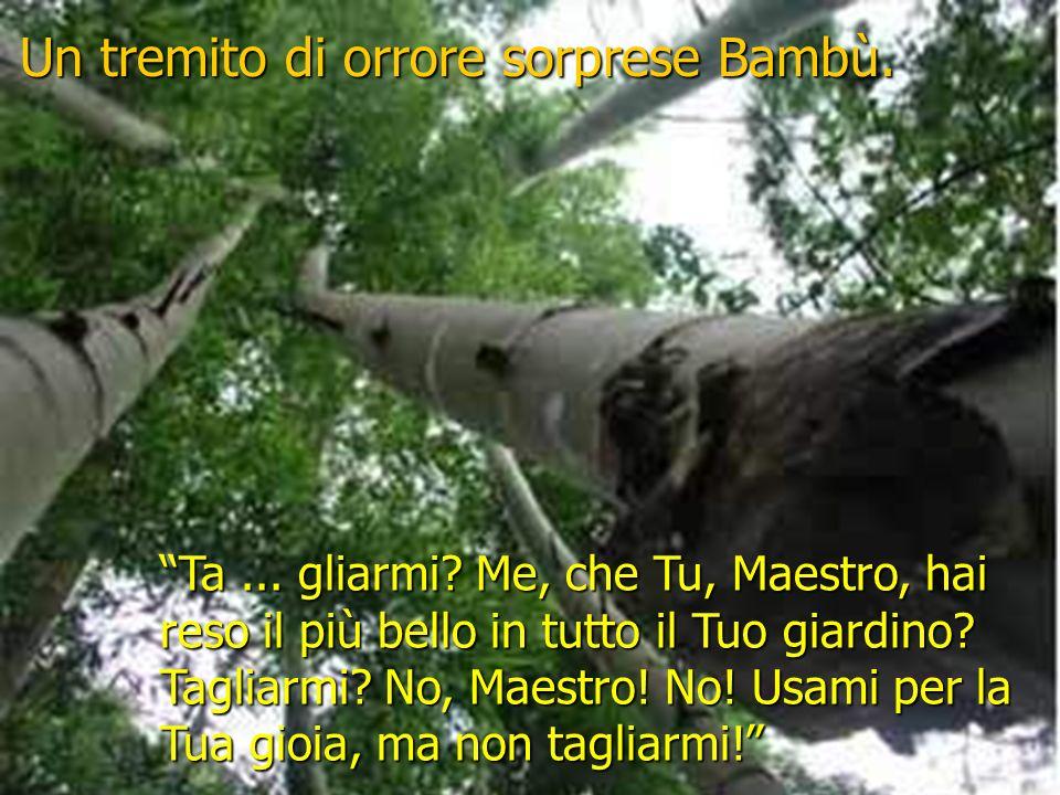 Bambù rispose: Maestro, sono pronto, usami come vuoi. Bambù, la voce del Maestro era cupa, Sarò costretto a prenderti e a tagliarti.
