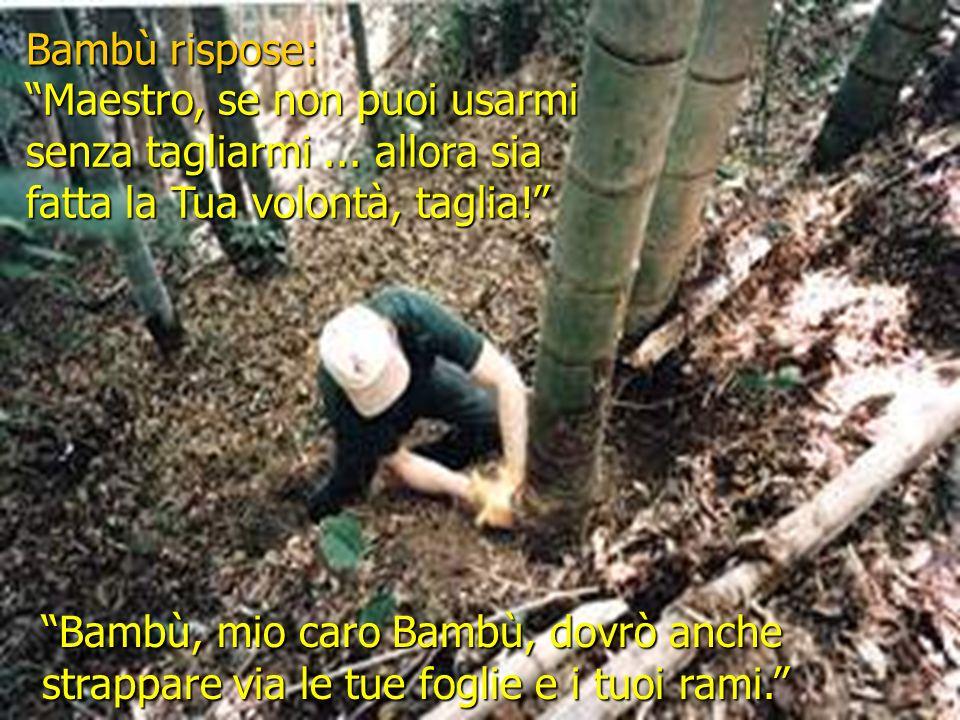 Il giardino diventò silenzioso. Il vento trattene il suo respiro. Si sentì un sussurro. Bambù piegò lentamente il suo capo fiero e glorioso.