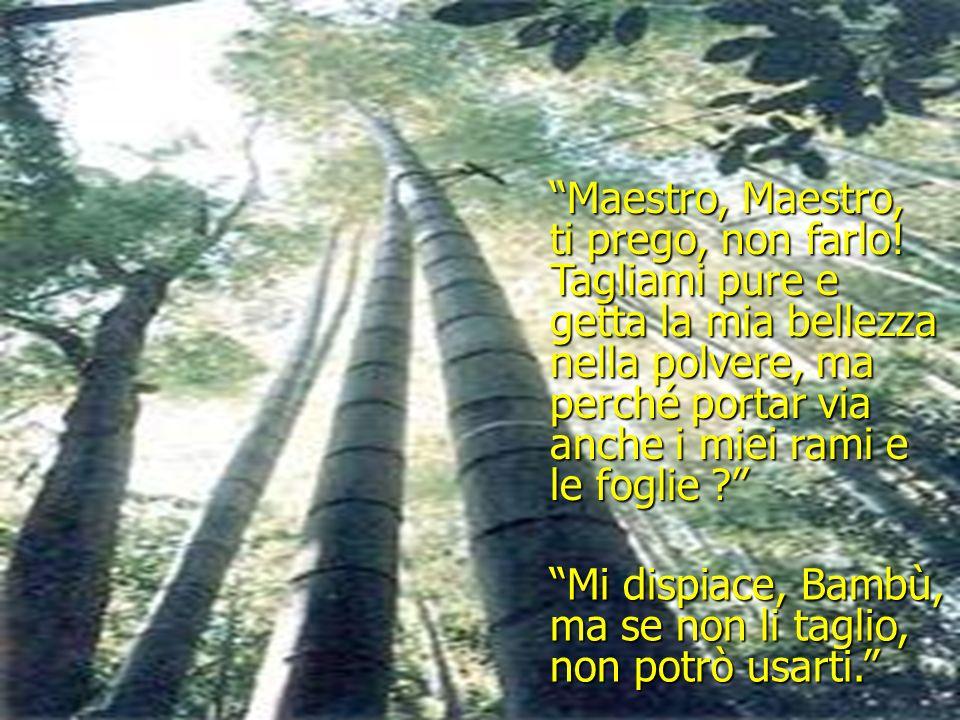 Bambù rispose: Bambù, mio caro Bambù, dovrò anche strappare via le tue foglie e i tuoi rami. Maestro, se non puoi usarmi senza tagliarmi... allora sia