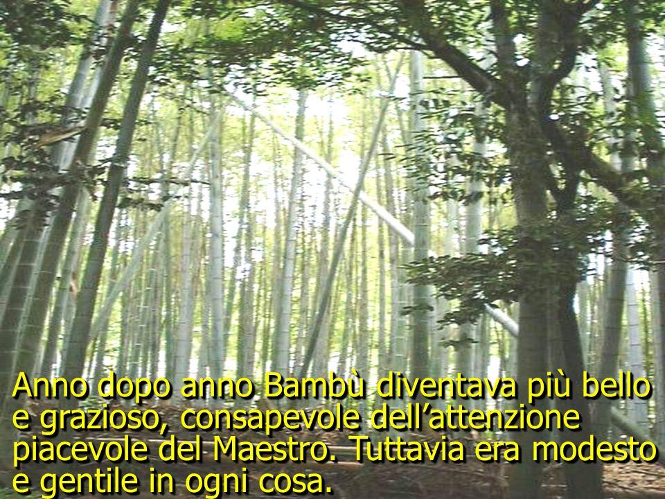 Di tutti gli abitanti del giardino, il più bello ed amato era il nobile e grazioso Bambù.