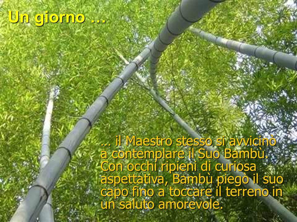 Bambù guidava la grande danza del giardino che tanto piaceva al cuore del suo Maestro. Spesso, quando il vento soffiava nel giardino … Bambù gettava d